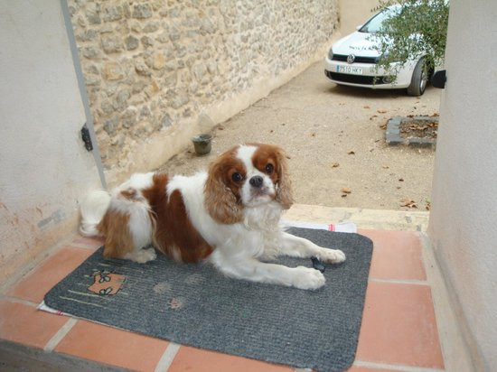 Domaine de Valbrillant : puppies looking for some attention