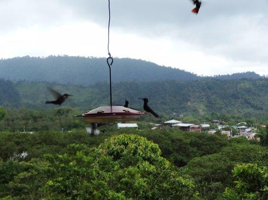 Hacienda San Vicente: Humming bird feeders