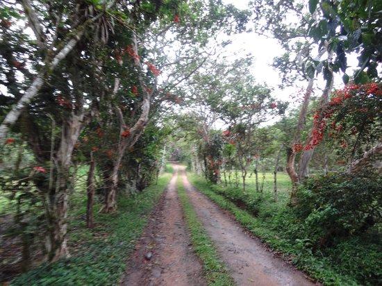 Hacienda San Vicente: Road path towards town from the Hacienda