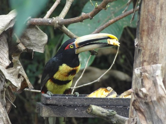 Hacienda San Vicente : Tucan - View from the breakfast area