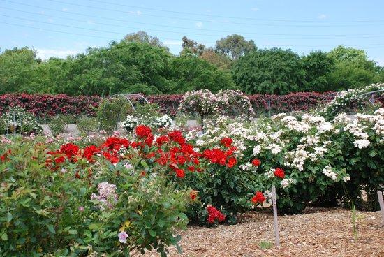 Botanic Park: Flowers