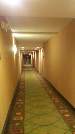 Hampton Inn Chattanooga-North/Ooltewah: Well lit, clean halls