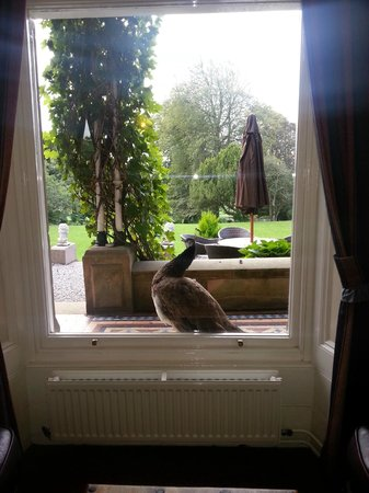 Broughton Craggs Hotel : View of gardens from lounge with peacock on window ledge