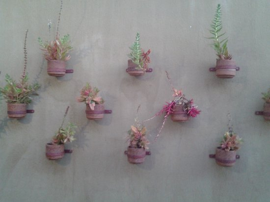 Zuleika Country House : interesting display of succulents