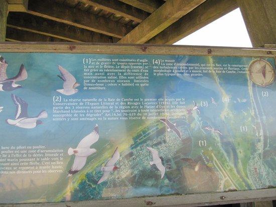 La Plage du Touquet : Réserve ornithologique