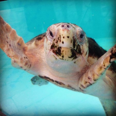 Loggerhead Marinelife Center: He was posing for me lol