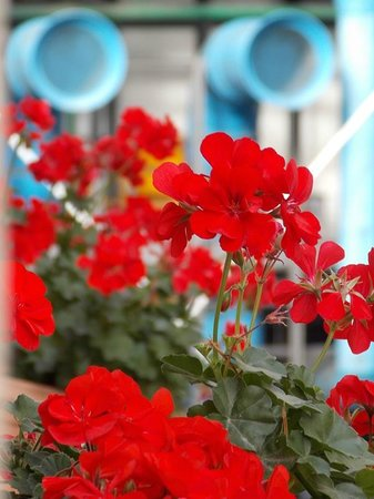 Hotel Beaubourg : Flower boxes on hotel balcony (Pompidou in background)
