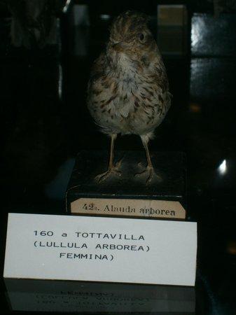 Ornithology Museum: Un esemplare degno di nota (ricorda mio fratello)!!!