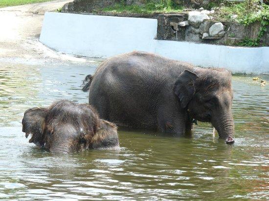 Sol Beach House Bali Benoa by Melia Hotels International: at the elephant  sanctuary
