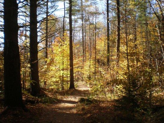 Wiessner Woods : Along the Sugar House Loop Trail