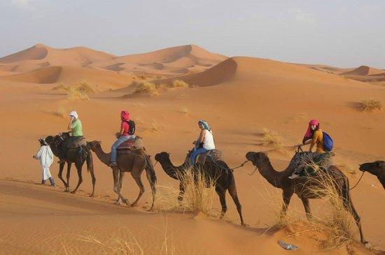 Discover Morocco Tours: merzouga camel ride