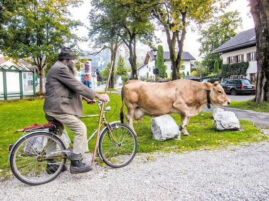 Garmisch-Classic : Downtown Garmisch I saw this farmer walking his cow.