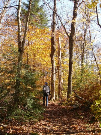 Robert Frost Wayside Trail: the woods