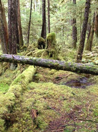 Settlers Cove State Recreational Site: Lunch Falls Trail