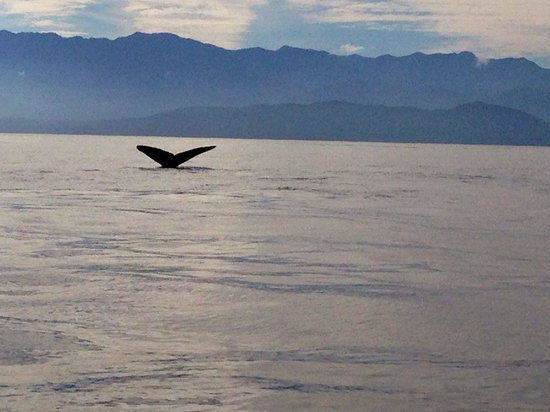 Eagle Wing Whale Watching Tours: Caught the tail of a humpback