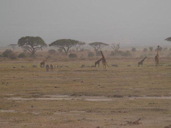 Antony Adventure Tours Kenya Safaris - Day Tours : Amboseli-Nationalpark