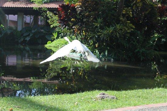 Natura Park Beach - EcoResort & Spa: Todo tipo de aves dentro del hotel hermoso para fotos y recorrer
