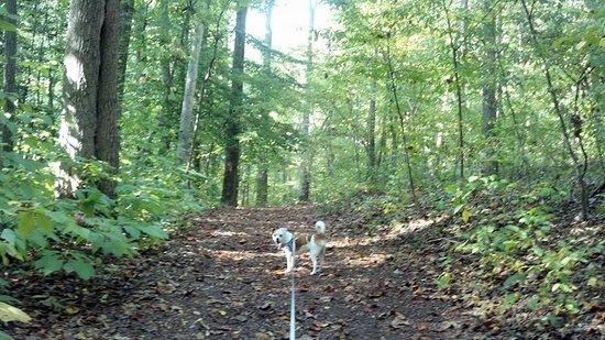 Adkins Arboretum: Wooded Trail