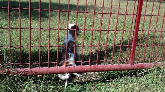 Adkins Arboretum: My puppy went under the gate and wanted to play with the goats