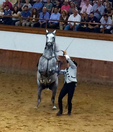 Fundación Real Escuela Andaluza del Arte Ecuestre : it was amazing to see horses this strong