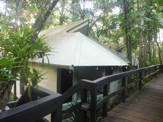 Daintree EcoLodge & Spa: Outside of banyan