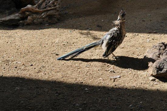 ZooAmerica North American Wildlife Park: Not road running...