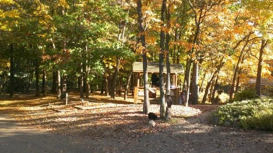 Hungry Horse Campground : Campground