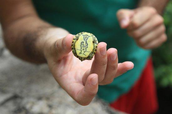 Villas Picalu B&B Boutique: una tortuga del cenote
