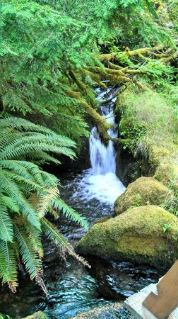 Watson Falls : Ferns along Falls