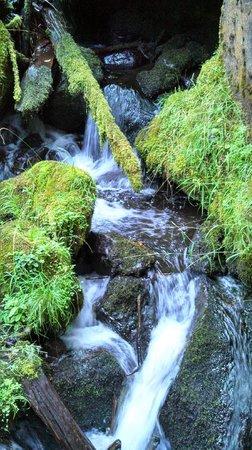 Watson Falls : Graceful Falls