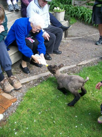 Rangitikei Farmstay: feeding one of the lambs