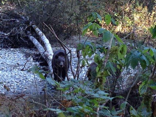 Discovery Marine Safaris Ltd.: Mama bear watching us