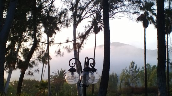 Tuscany Hills Retreat: Morning Fog