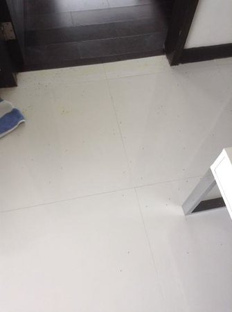 Tanawin Resort and Luxury Apartments: ants lying dead from the aircon