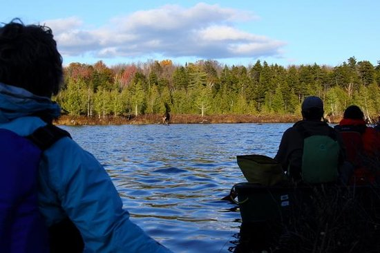Northeast Whitewater - Day Tours: Watching a moose from the shadows, in our canoes