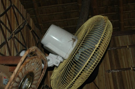 Zipolo Habu Resort : Wall fan + wildlife