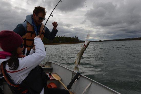 Blachford Lake Lodge: fishing