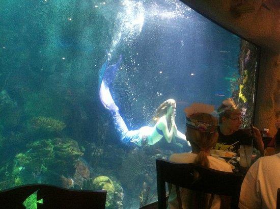 Live Mermaid Show In Denver Aquarium Picture Of Aquarium Restaurant Denver Tripadvisor