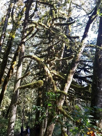 Wallace Falls State Park : Moss covered tree