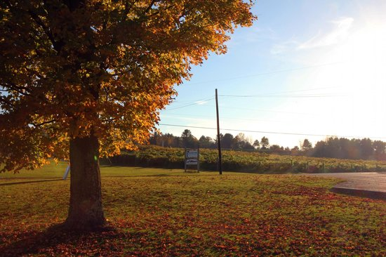 Boyden Valley Winery : The vineyards at fall