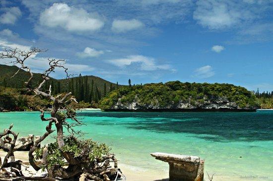Piscina naturale isola dei pini nuova caledonia foto di for Isola gonfiabile piscina