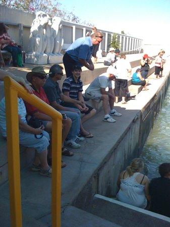 Aquascene : Feeding the Milkfish.