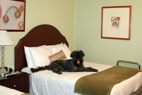 Quail Park Lodge - A Canyons Collection Property: Two Paws up for Pet Friendly Rooms!