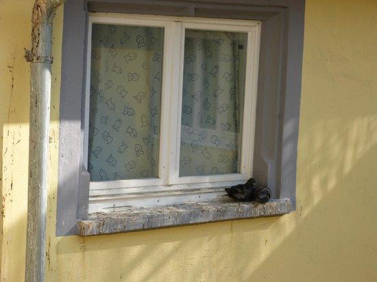 Medusa Hotel : Wildtaubenschlag - Bild bitte nicht vergrößern,-(