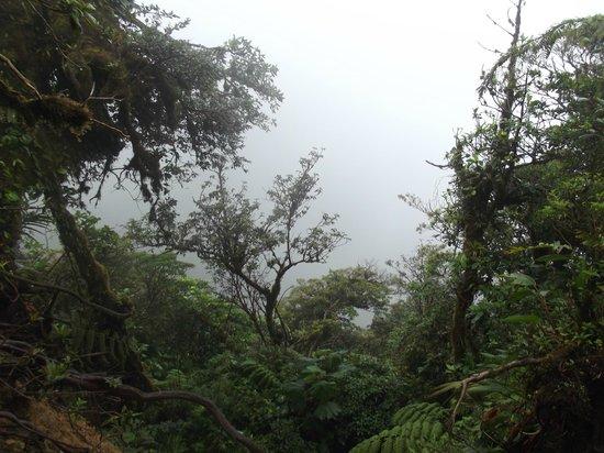 Mariposa Bed & Breakfast: foret de nuage monteverde