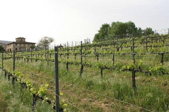Agriturismo Poggiacolle: Wein und Unterkunft im Hintergrund