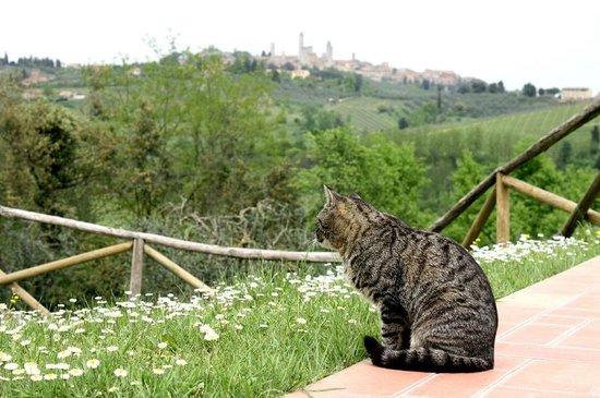 Agriturismo Poggiacolle: Katzen auf dem Hof