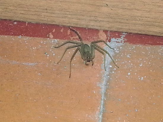 Central Normandie Hotel: Spiders inside room upon arrival. They were correctly cleaned by hotel staff after complaint