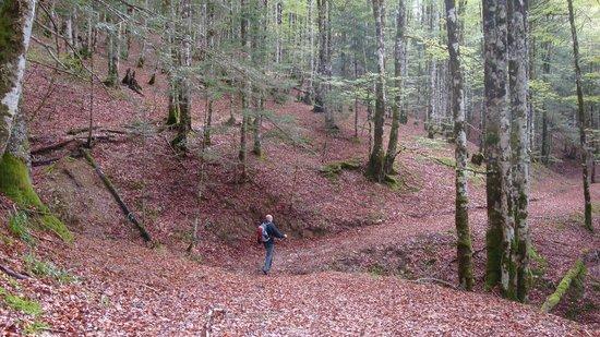 Hotel Rural Besaro: Paseo por la Selva de Irati