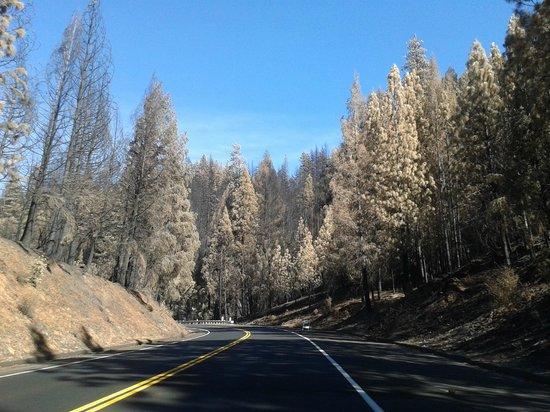 Evergreen Lodge at Yosemite: incendio area evergreen
